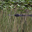 Reflections P_7781 by Michael McCasland