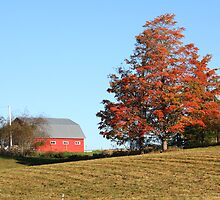 Farm Scene In Autumn by HALIFAXPHOTO