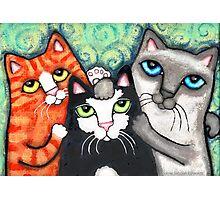 Siamese Tabby and Tuxedo Cats Posing Art Print Photographic Print