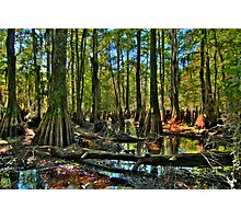 Deep in the Woods Photographic Print