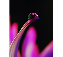 PINK Collection for the Cure - Her gentle touch Photographic Print