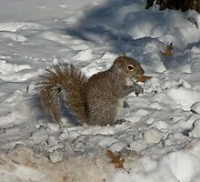 Squirrel in Snow 1 by dubya13