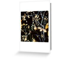 .Contrast of autumn - 1 Greeting Card