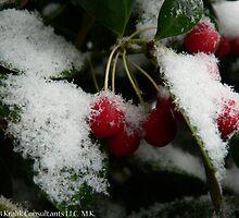 Winter Berries by KCGraphics
