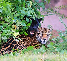 Peek-A-Boo by Lisa Jones Caldwell