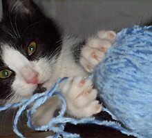 Ok - kitten with a ball of wool - predictable but cute. by AbsintheFairy