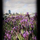 Lavender Perth by Kate Shaw