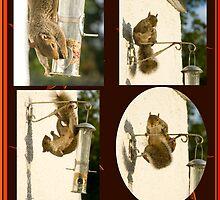 Secret Squirrel Thief by DonDavisUK