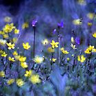 Fairy Flowers  by Diane Schuster