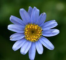 Blue by Stephanie  Newbold