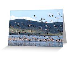 Flight of the Flamingo.....Lake Nakuru....kenya Greeting Card