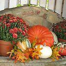 ~Autumn Design~ by NatureGreeting Cards ©ccwri
