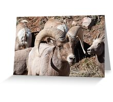 Big Horns Greeting Card