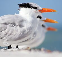 Waiting in Tern by Alex  Bramwell