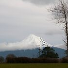 Tree and Taranaki by Werner Padarin