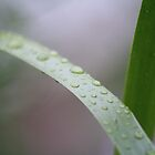 droplets by Kellie Metcalf