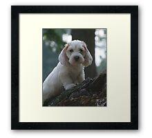 PBGV Puppy Framed Print