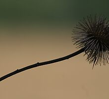 Prickle by missdaisy