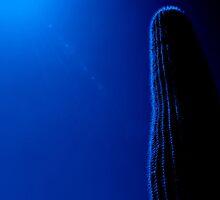 Blue Saguaro by Stephanie  Newbold