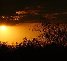 Sundown by Stephanie  Newbold