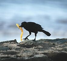 Now That's What I Call Fast Food! by Carol Barona