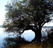 Zambezi River by Braedene