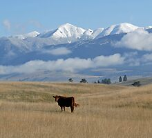 KOOTENAI COUNTRY by kotybear