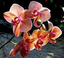 Orchids from Tennesse...  by LjMaxx