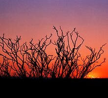 OCOTILLO BLOOD SUNSET by Owen Kondratuk