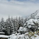 Snow VI by Christine Jones