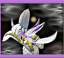 Iris In The Sky by George  Link