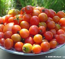 Tomato Time by Michael  Luby