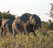 Charging Elephant by Marylou Badeaux