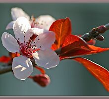 Spring Blossoms by Chet  King
