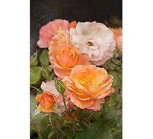 Summer Rose Photographic Print