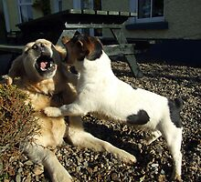Two playful dogs by John Quinn