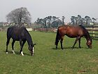 Two beautiful horses by John Quinn