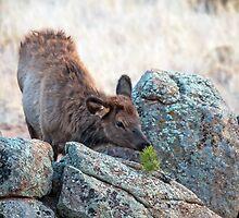 Little elk and little tree by Eivor Kuchta