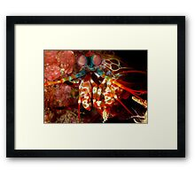 Eyeballed! Framed Print