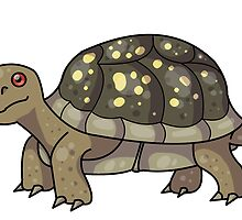 Box Turtle by pooknero