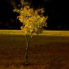 Autumn Sapling by sherryk