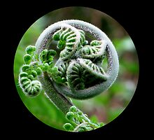 Baby Fern by gothgirl