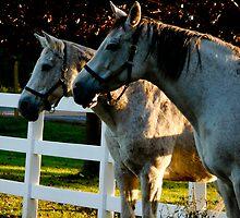 Horses by Stephen Almendinger