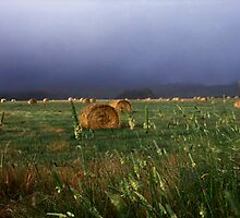 Hay Day, Country NSW by Matt  Lauder