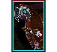 Parrot Head Photographic Print