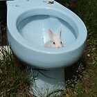 Beware of albino toilet bunnies 2 by InKibus