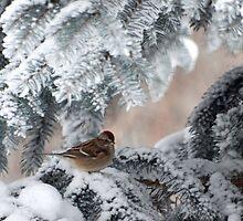 Winter Wonders by CalendaRus