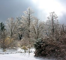 winter wonderland by 1busymom