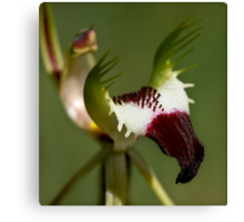 Detail - King Spider Orchid Canvas Print