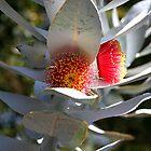 australian landscapes by trekka